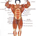 meet-bodybuilding1-muscle