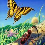 داستان حکمت آموز کوتاه(مورچه اخراجی),مورچه اخراجی,داستان حکیمانه کوتاه,داستان های کوتاه حکیمانه