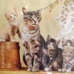 داستان حکمت آموز کوتاه(عتیقه فروش و گربه),عتیقه فروش و گربه,داستان حکیمانه کوتاه,داستان های کوتاه حکیمانه