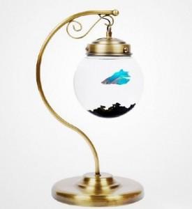 fish-bowl-(5)