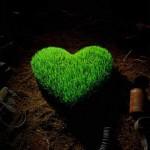 سبزه عيد سريع