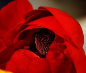 تصاویر گل های زیبا, تصاویر گل های قشنگ, تصاویر گل های عجیب, تصاویر گل های بسیار زیبا,