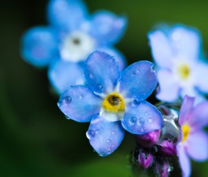 تصویر گل برای بک گراند,عکس گل برای بک گراند,عکس گل بک گراند,