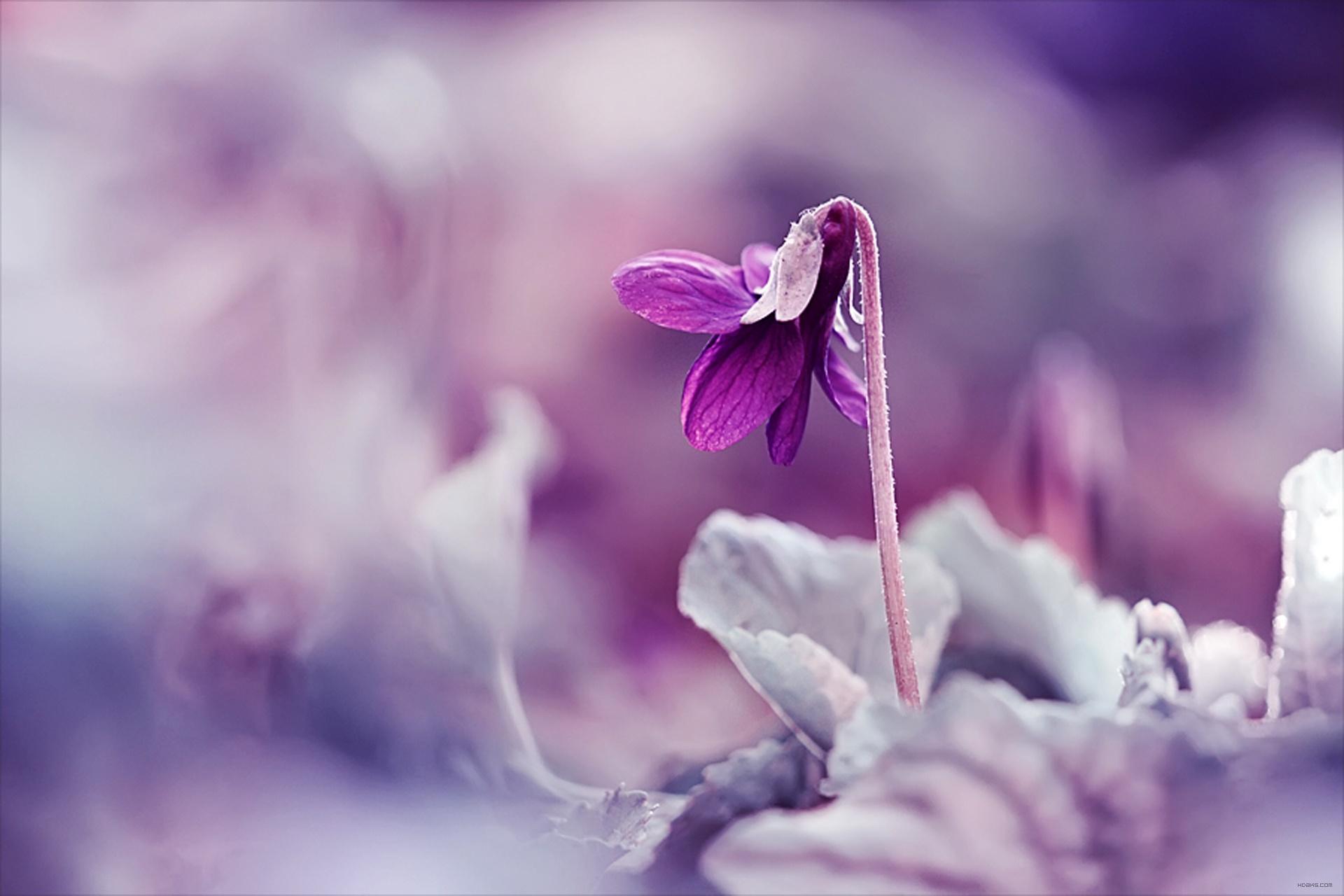 عکس گل بنفش - سرزده