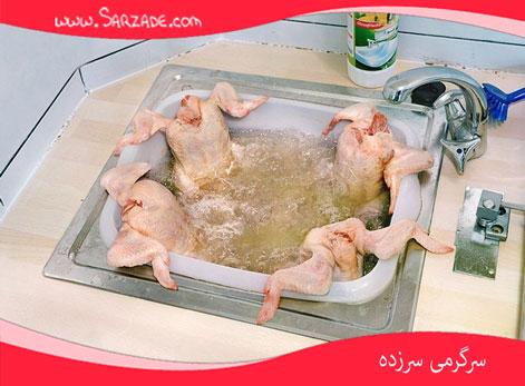 جکوزی مرغی