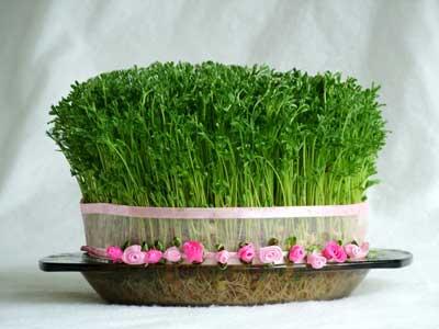 آموزش کاشت سبزه عید نوروز