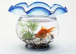 آموزش خرید و نگهداری ماهی قرمز عید نوروز