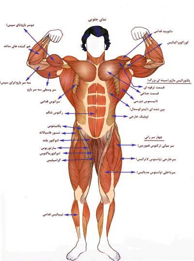 meet-bodybuilding1-muscle