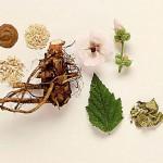 خواص گیاهان دارویی بارهنگ,خواص درمانی گیاه بارهنگ,خاصیت گیاه بارهنگ,خواص دارویی گیاه بارهنگ
