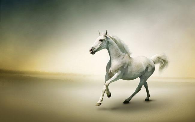 داستان کوتاه و جذاب (اسب اصیل و زیبا و فریب کاری مرد ثروتمند),داستان کوتاه آموزنده,داستان کوتاه خنده دار
