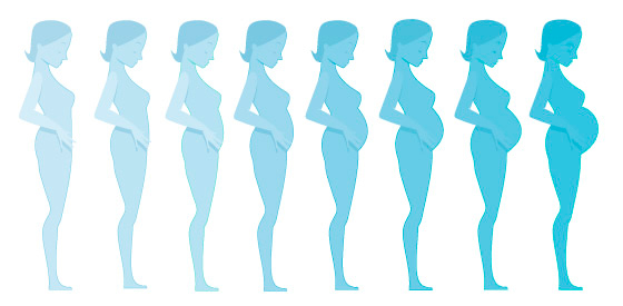 بارداری چند هفته است,دوران بارداری چند هفته است,کل بارداری چند هفته است