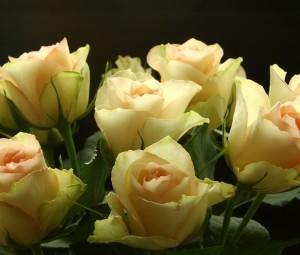 عکس گل رز زرد,عکسهای گل رز زرد,دانلود عکس گل رز زرد,عکس از گل رز زرد,عکس دسته گل رز زرد,تصویر گل رز زرد