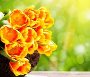 عکس گل برای فیس بوک,عکس گل برای کاور فیس بوک,عکس گل برای پس زمینه,عکس گل برای دسکتاپ,عکس گل برای پشت صفحه